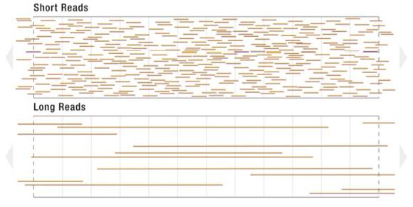 Zero-mode Waveguide & Single Molecule Real Time Sequencing